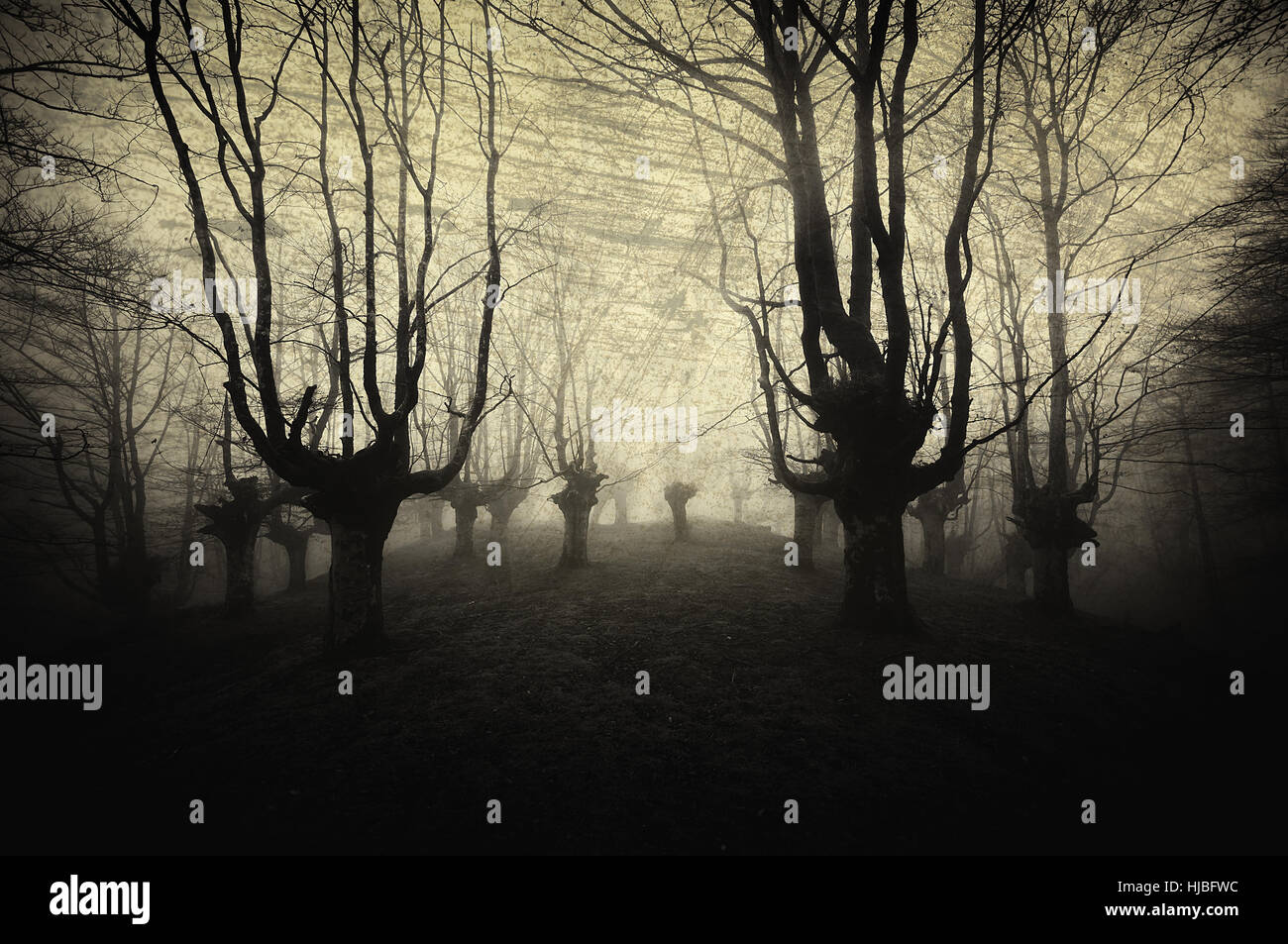 scary forest with creepy trees - Stock Image