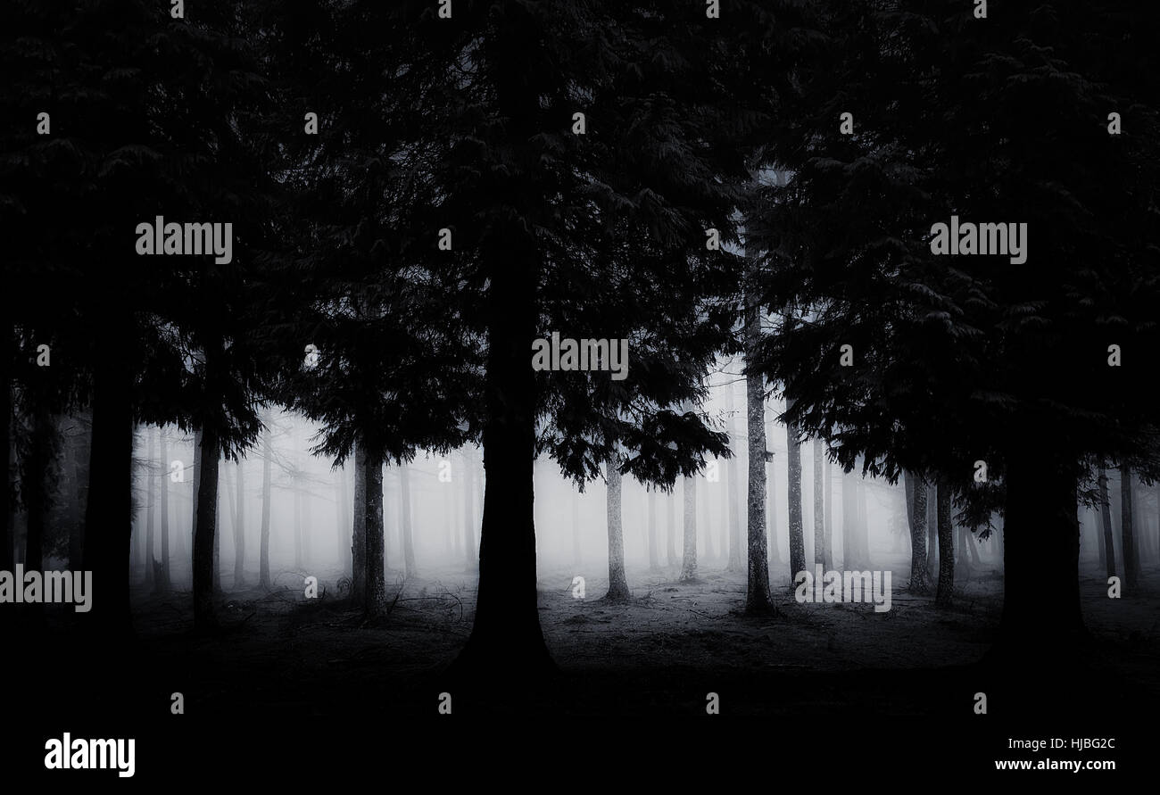 dark and scary forest - Stock Image