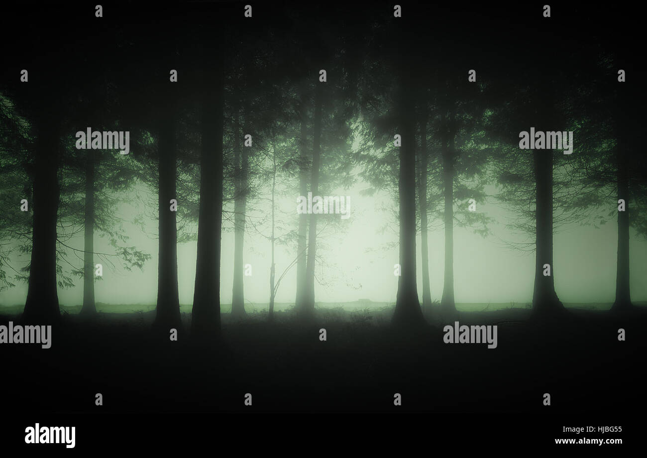 dark and gloomy forest with fog - Stock Image