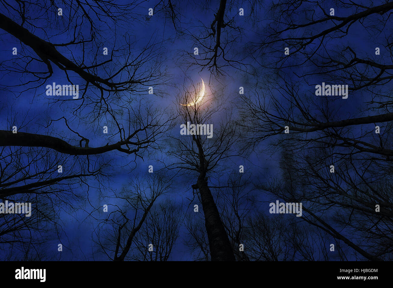 horror forest with moon at night - Stock Image