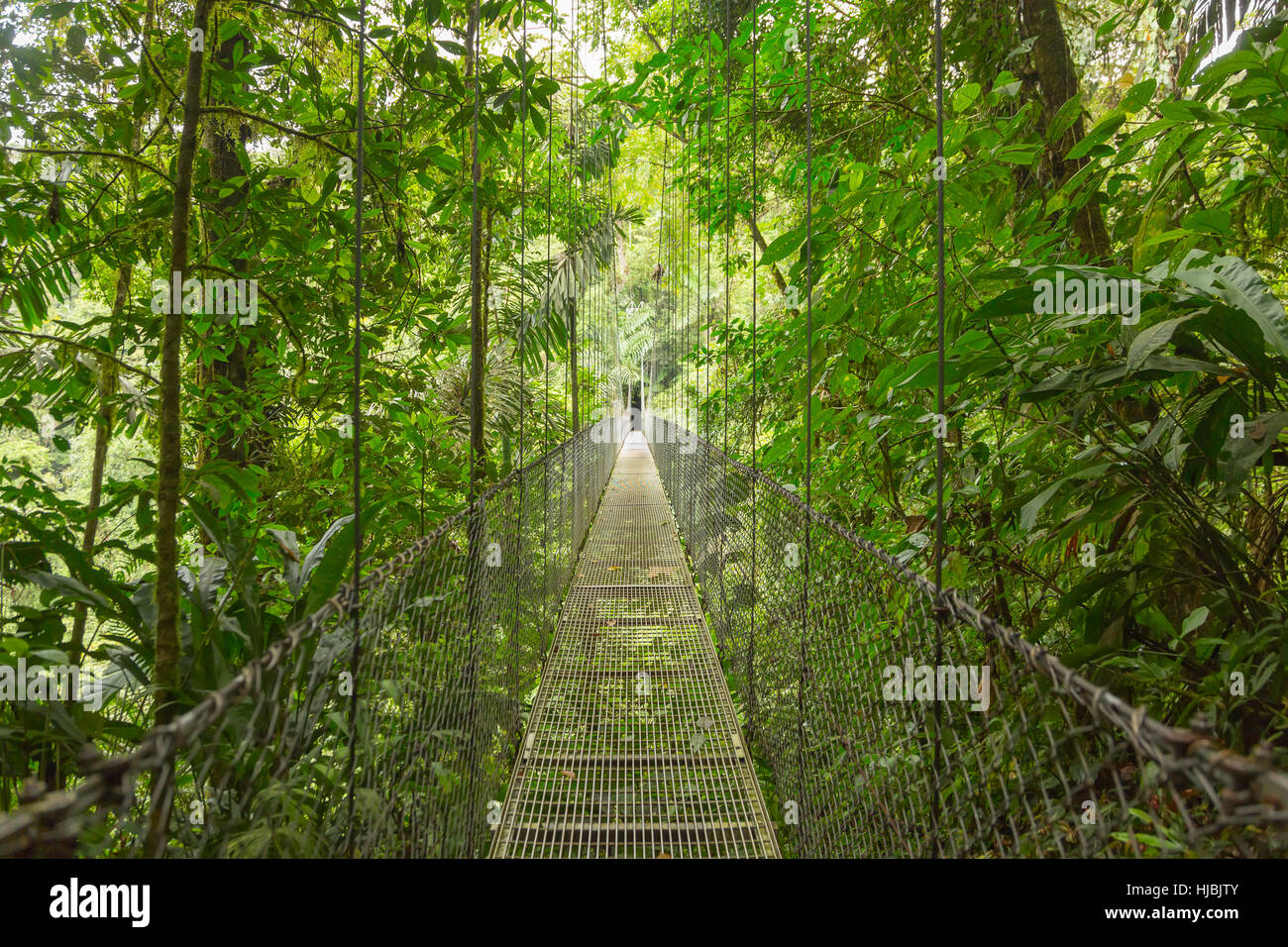 Hanging bridge at natural rainforest park in Costa Rica - Stock Image