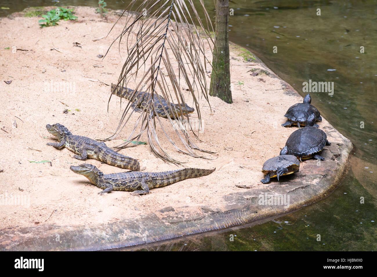 3b94e9da7d0c Foz do Iguazu