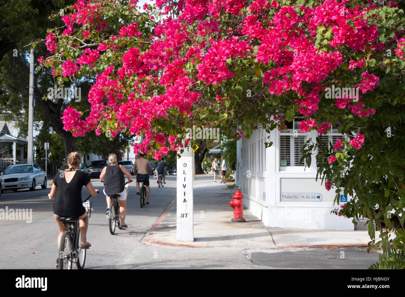 Key West tourists bicycle pass Olivia Street in Key West, Florida. - Stock Image