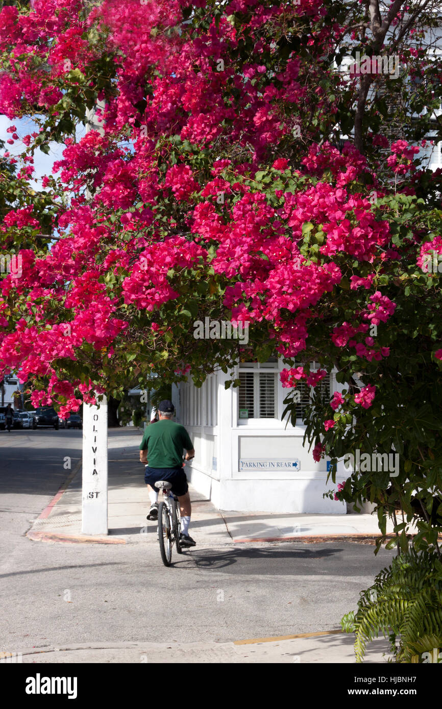 Bicyclist along Olivia Street in Key West, Florida. - Stock Image