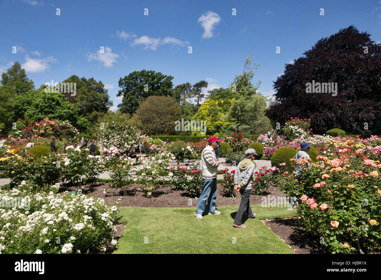 Visitors in the Rose Garden, Christchurch Botanic Gardens, Christchurch, New Zealand - Stock Image