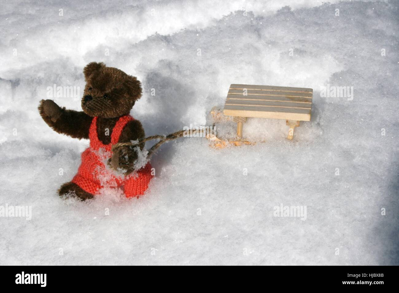 Winter bear cold teddy teddy bear teddybear sledge cash cold winter bear cold teddy teddy bear teddybear sledge cash cold cash altavistaventures Images