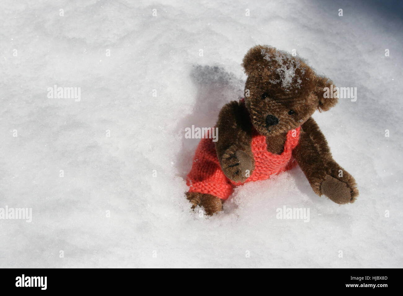 Winter bear cold teddy teddy bear teddybear cash cold cash winter bear cold teddy teddy bear teddybear cash cold cash money in altavistaventures Images