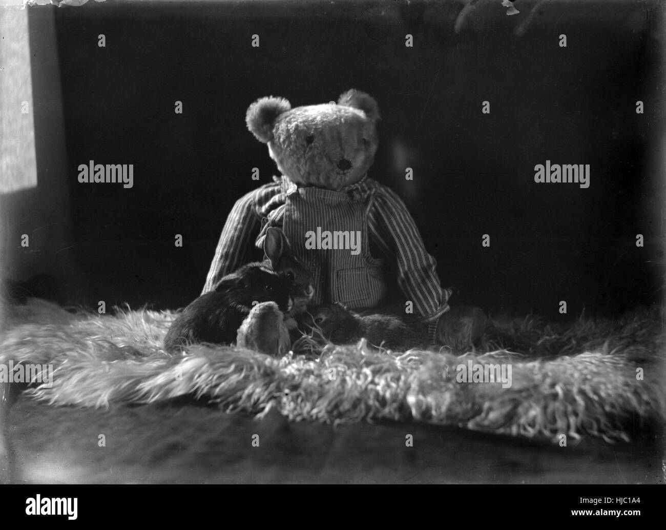 Antique c1920 photograph, teddy bear and bunny rabbits. - Stock Image