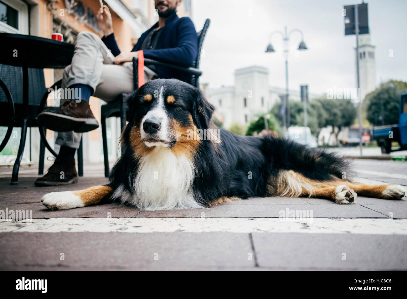 Portrait of dog lying down waiting at sidewalk cafe - Stock Image