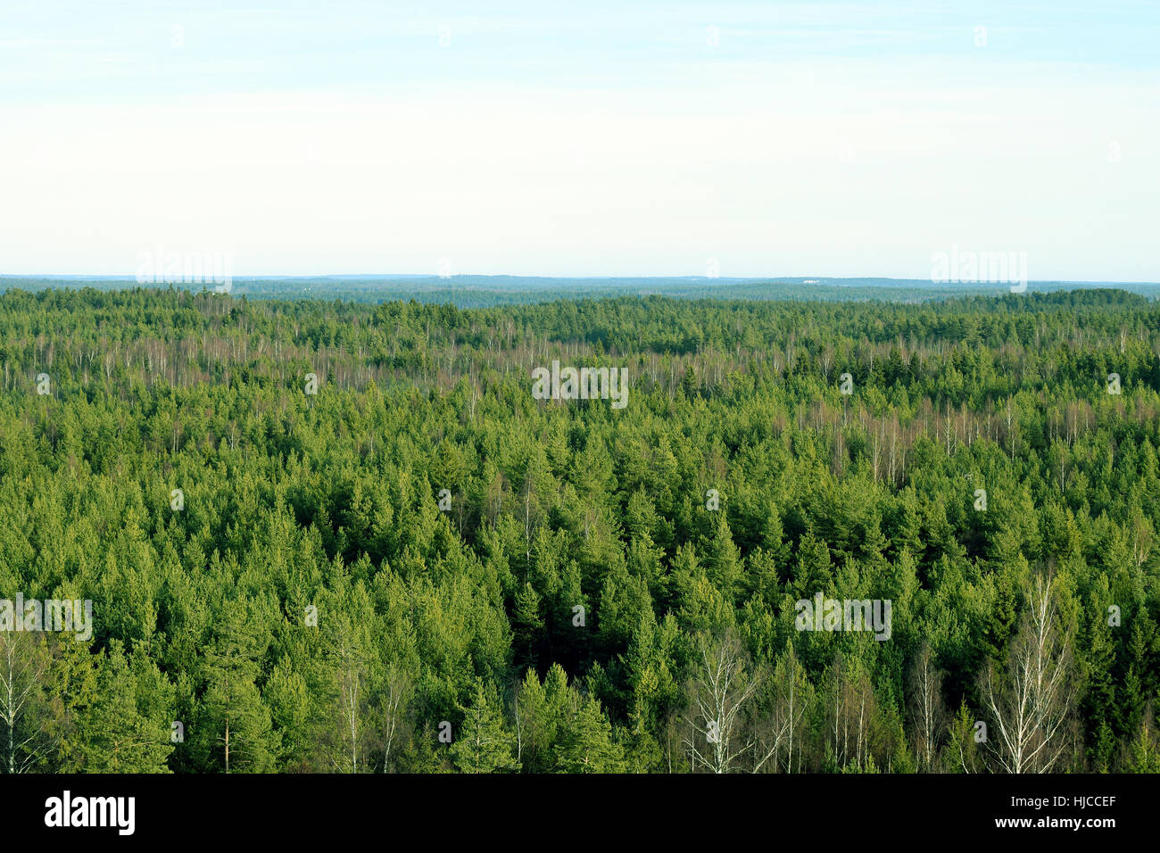 Forest aerial view. Birches, pines and spruces in Southern Finland. - Stock Image