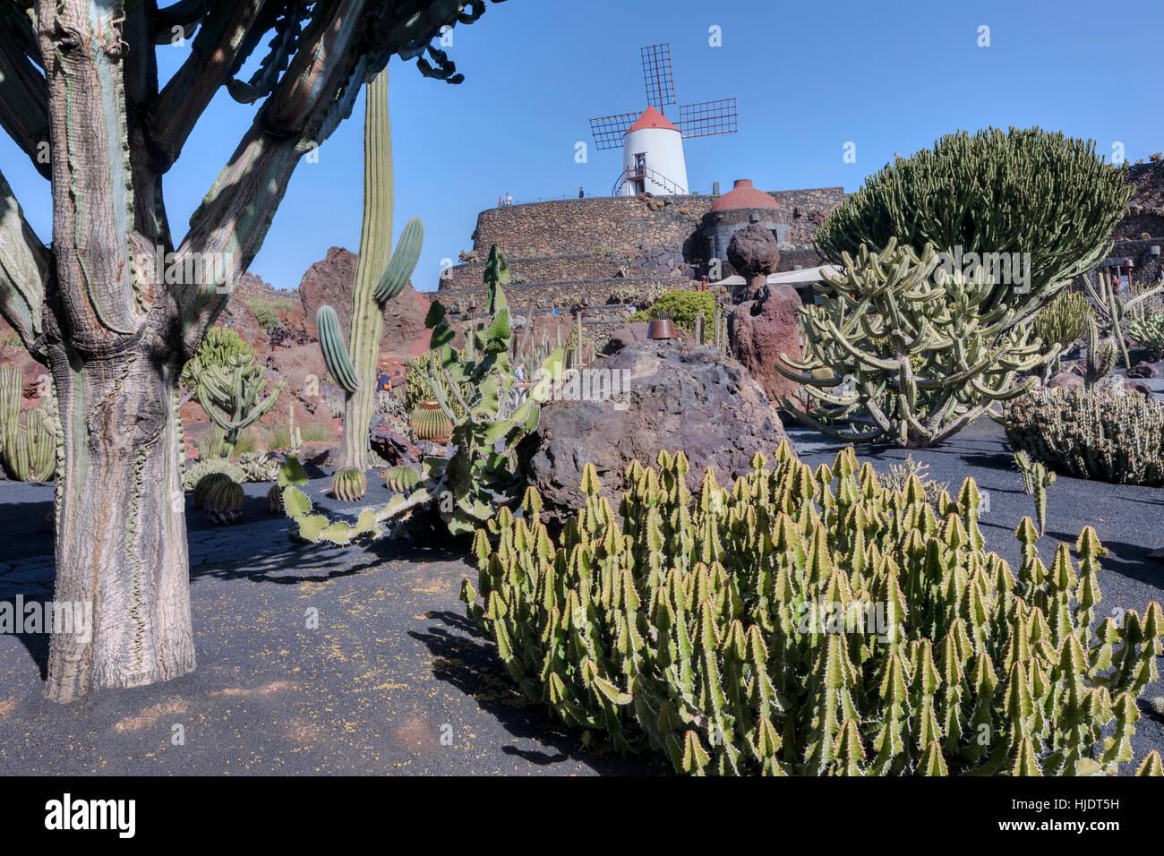 Jardin de Cactus, Guatiza, Lanzarote, Canary Islands, Spain - Stock Image