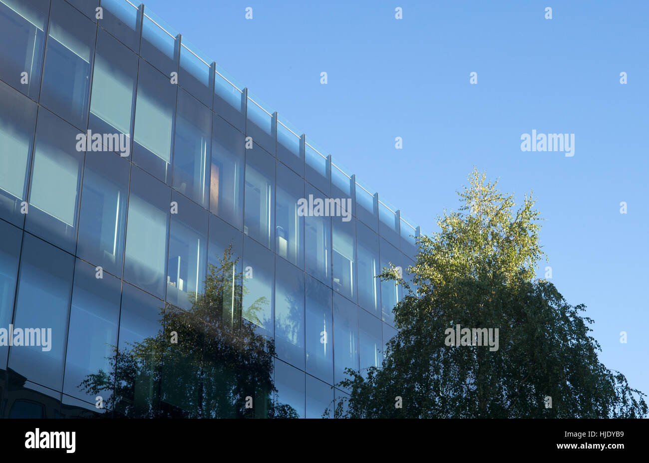 Leafy tree and blue sky reflected in glass walled building Stock Photo