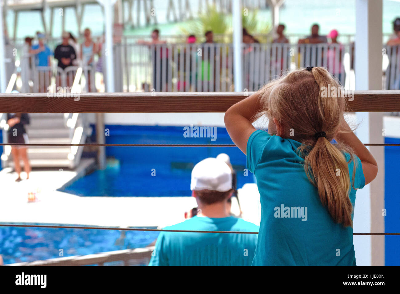 A young girl with blond hair and a blue shirt hanging on the railing of the dolphin show at the Gulfarium Marine - Stock Image