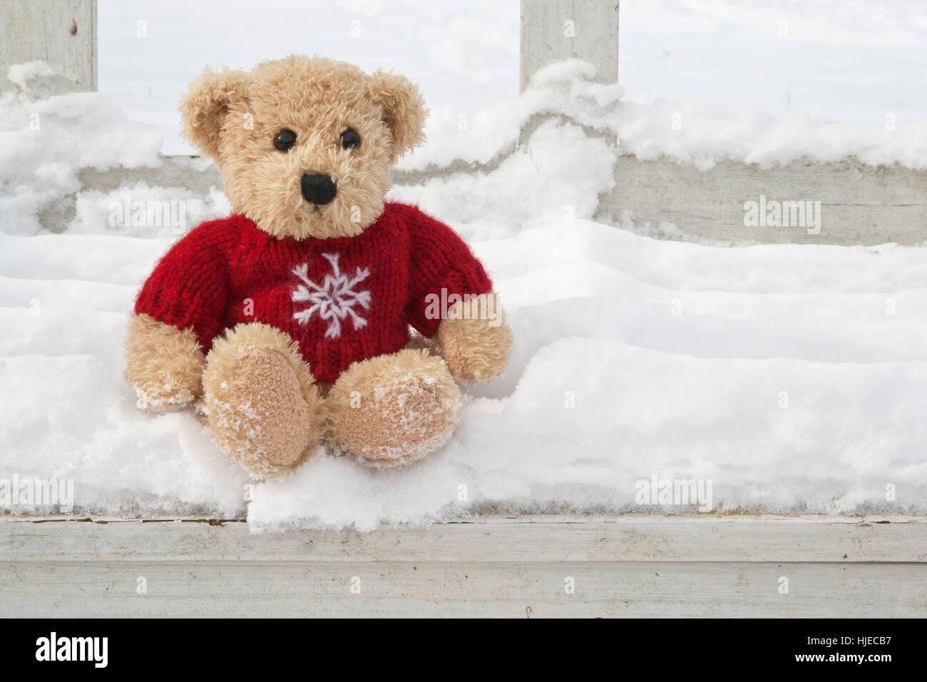 Winter bear cold wool small stock photos winter bear cold wool winter bear cold wool small tiny little short altavistaventures Images