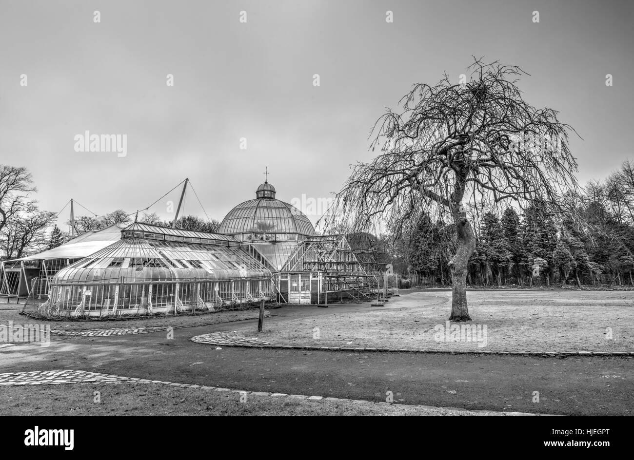 The Winter Gardens at Tollcross Park Glasgow - Stock Image