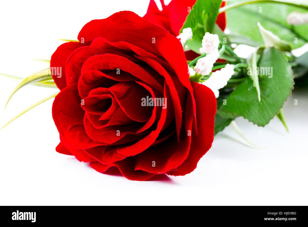 present, leaf, object, colour, flower, plant, rose, bloom