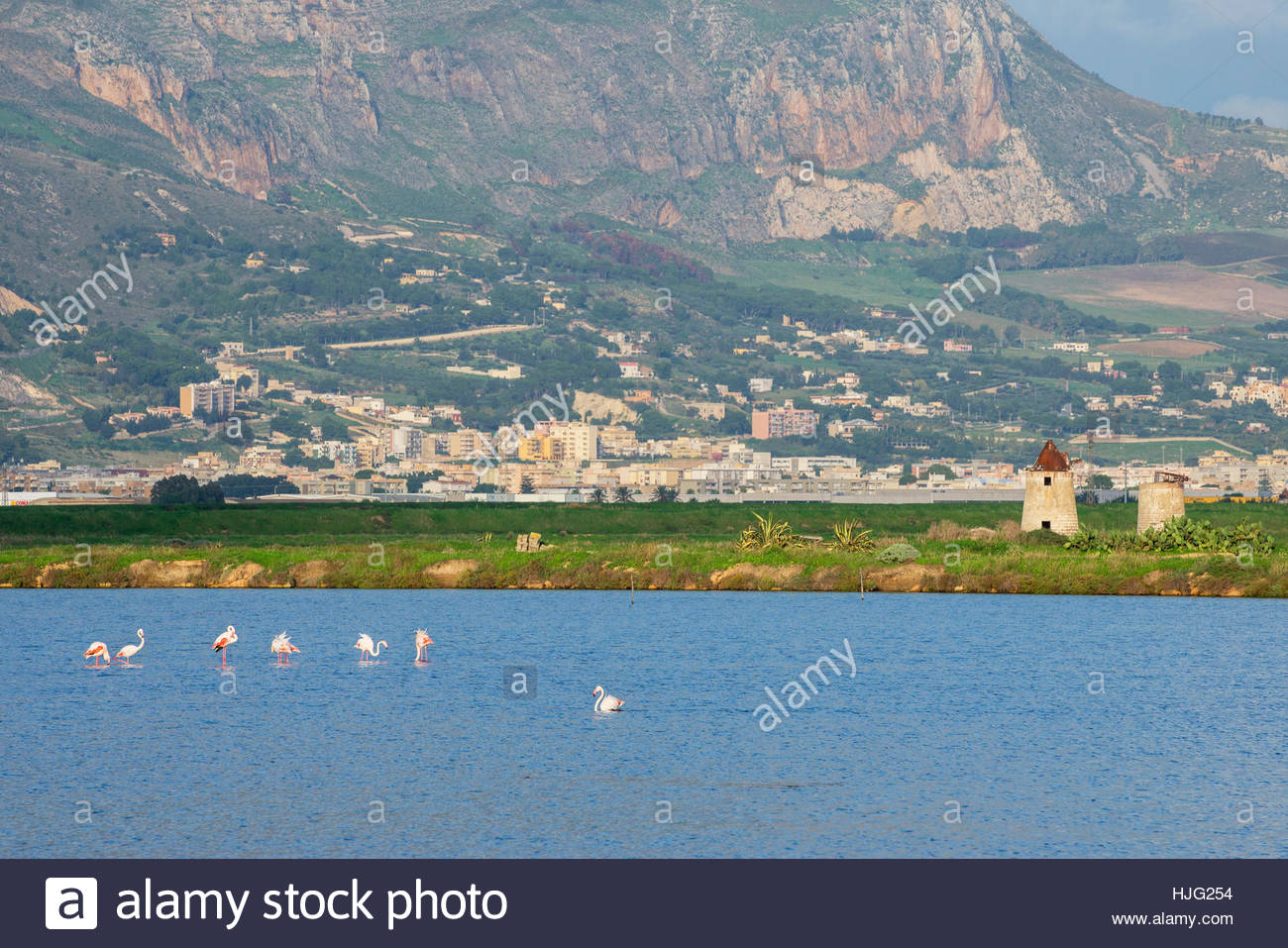 Pink Flamingos at Salt Pans, Trapani, Sicily, Italy. - Stock Image