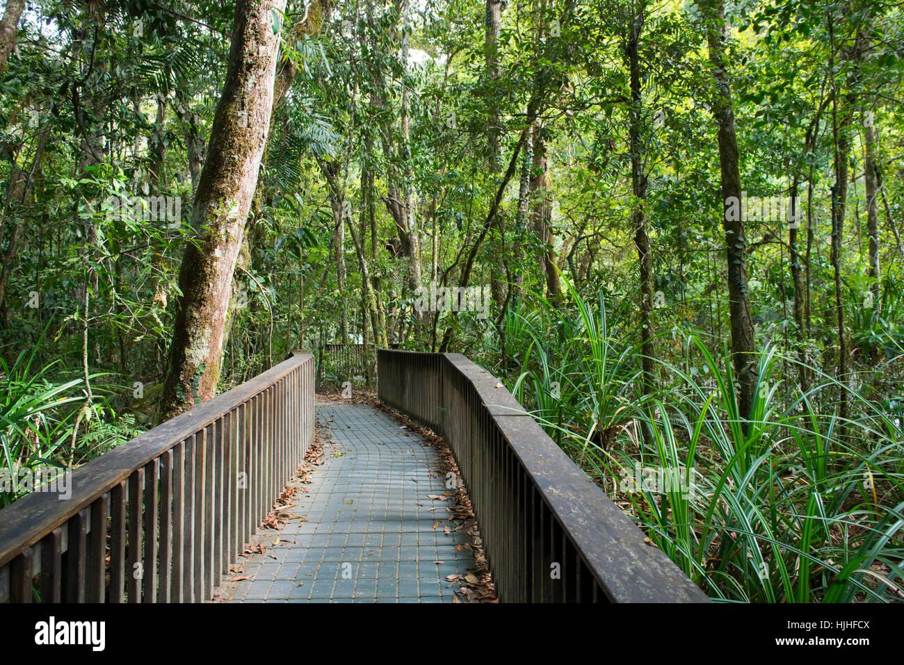 Boardwalk through the Rainforest at Mossman Gorge, Queensland Australia - Stock Image