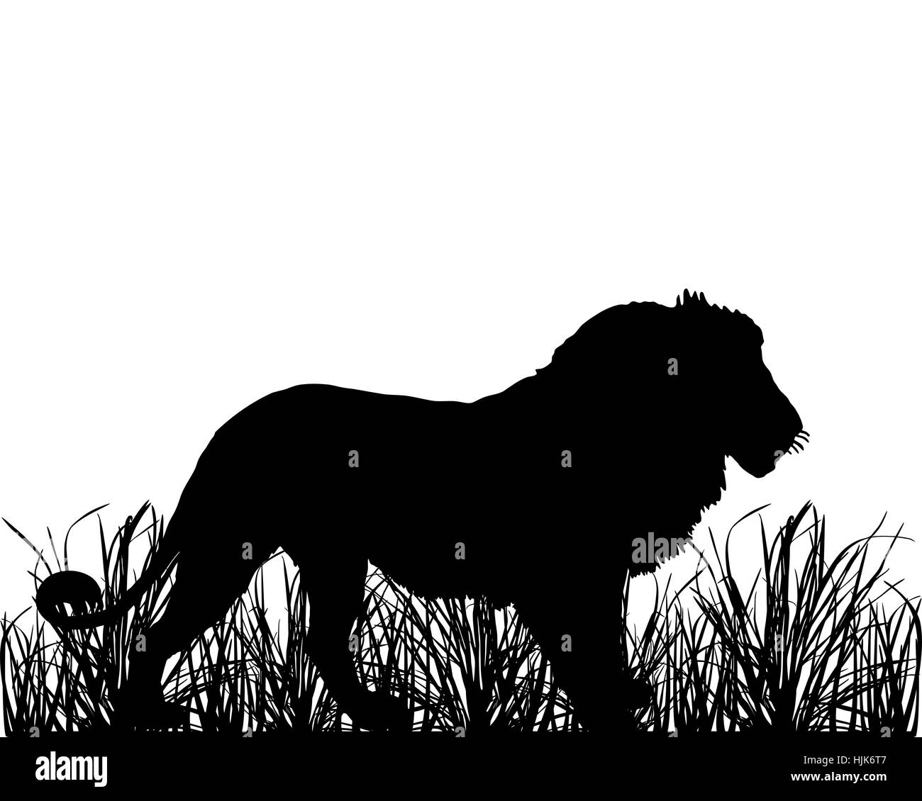 optional, graphic, green, savannah, lion, cat, big cat, feline predator, black, - Stock Image