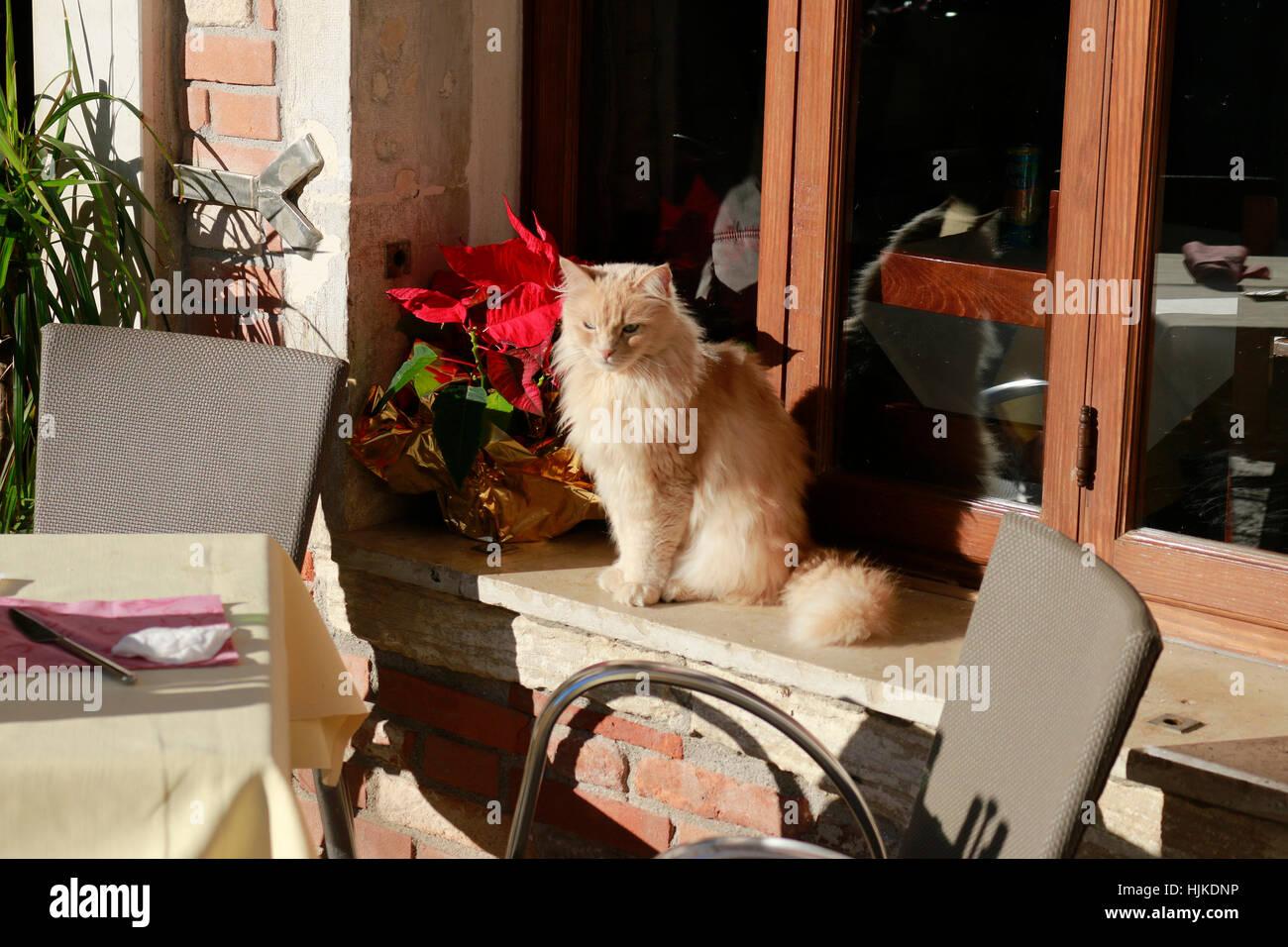 Katze, Venedig, Italien. Stock Photo