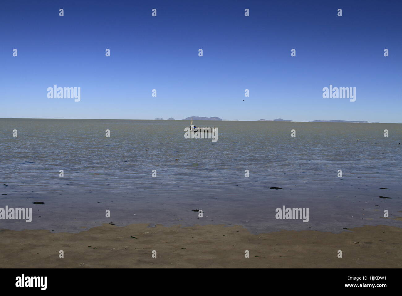 blue, travel, bird, birds, america, tourist, south, spanish, flamingos, - Stock Image