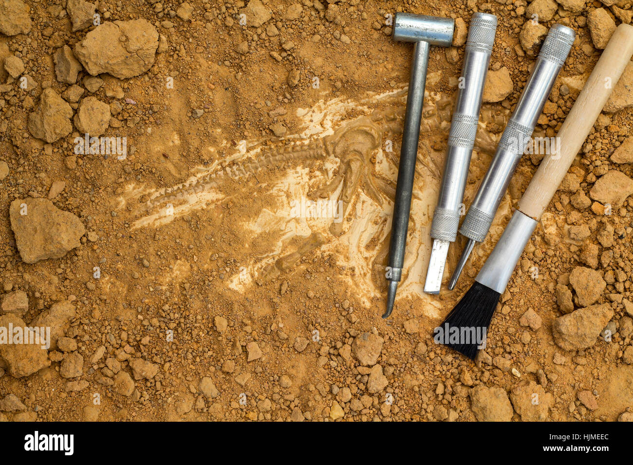 Skeleton and archaeological tools.Training for dig fossil.Simulated same as real digging. Stock Photo