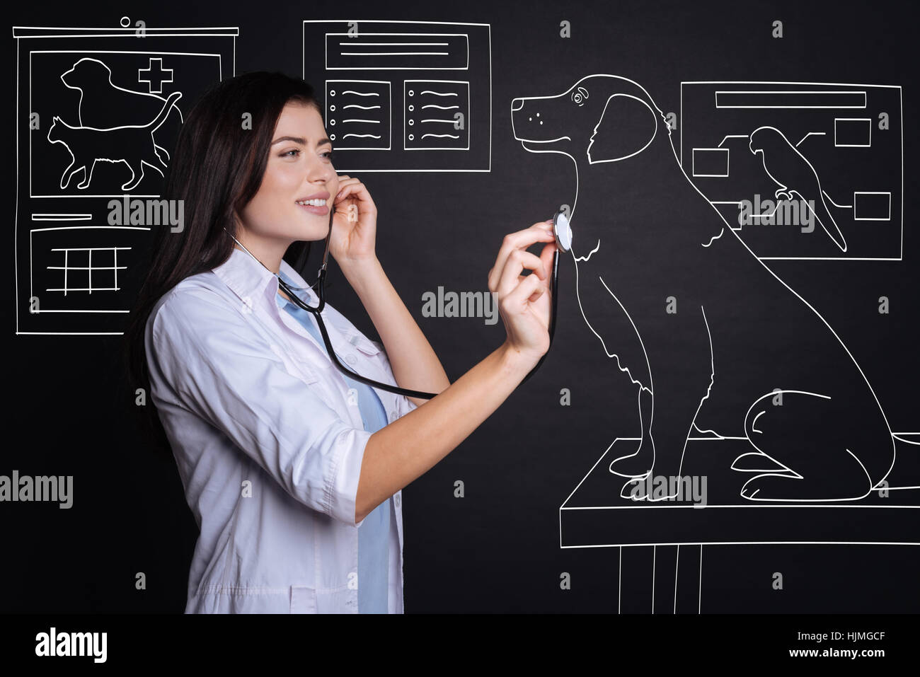 Positive female veterinarian examining a dog. - Stock Image