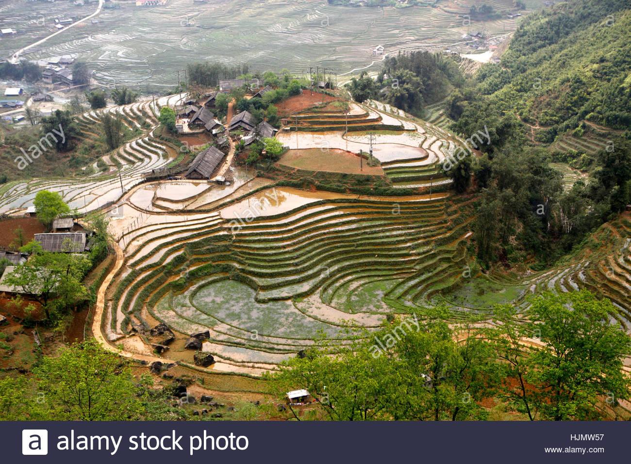 Terraced rice paddies in Sapa, Vietnam. - Stock Image