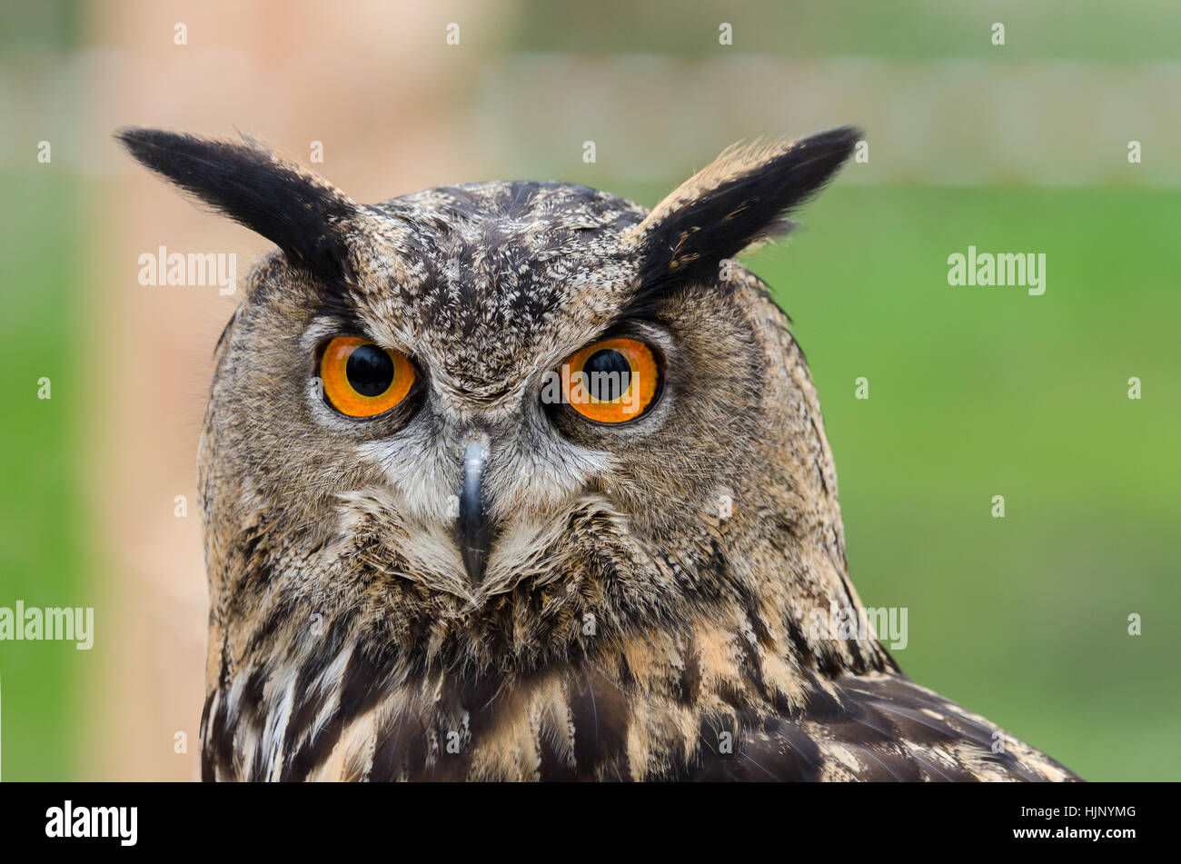 Animal Eye Organ Beak Owl Wings Colors Colours Italy Nature Stock Photo Alamy