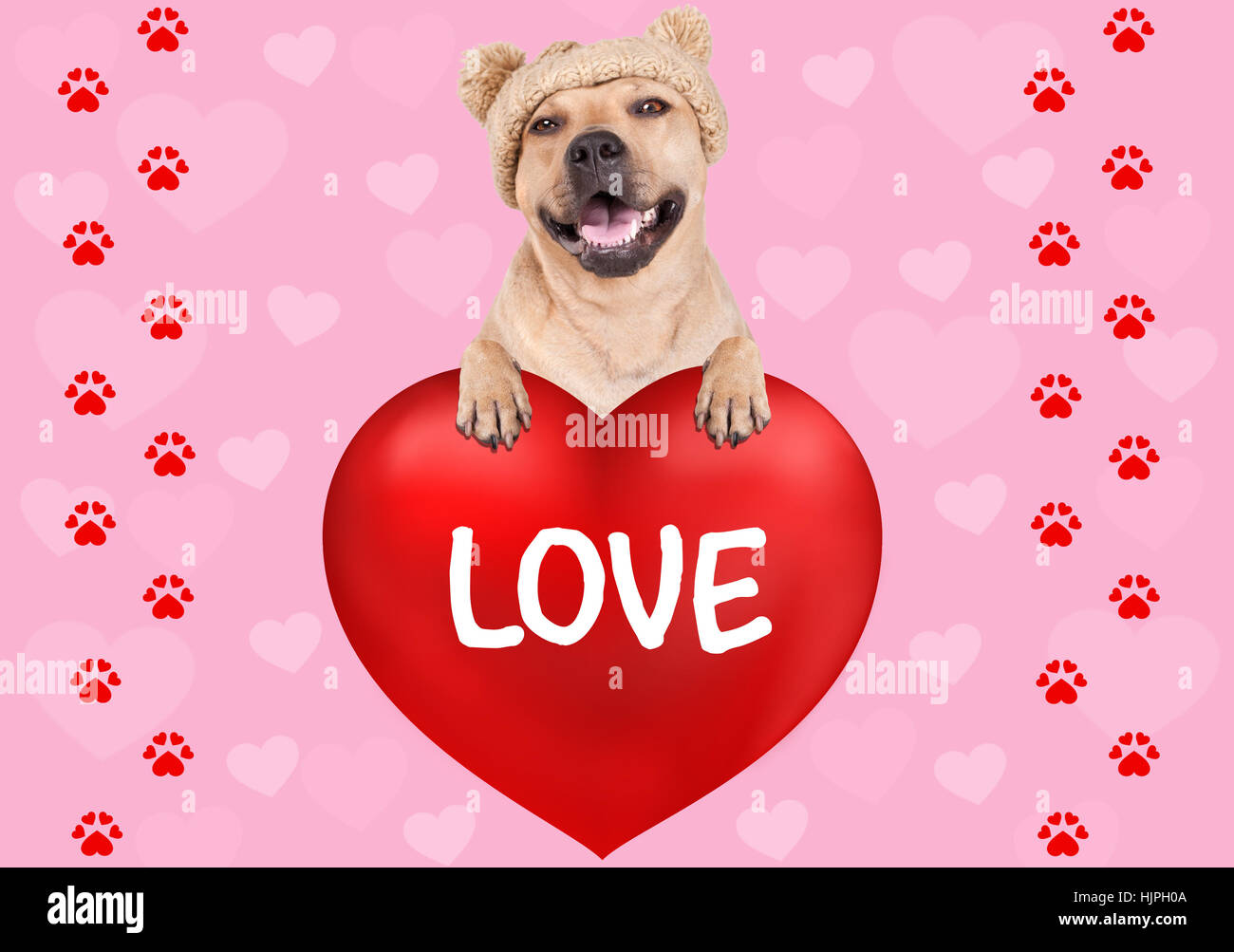 lovely cute dog hanging with paws on big valentine's day heart with text Love on pink background with hearts and Stock Photo