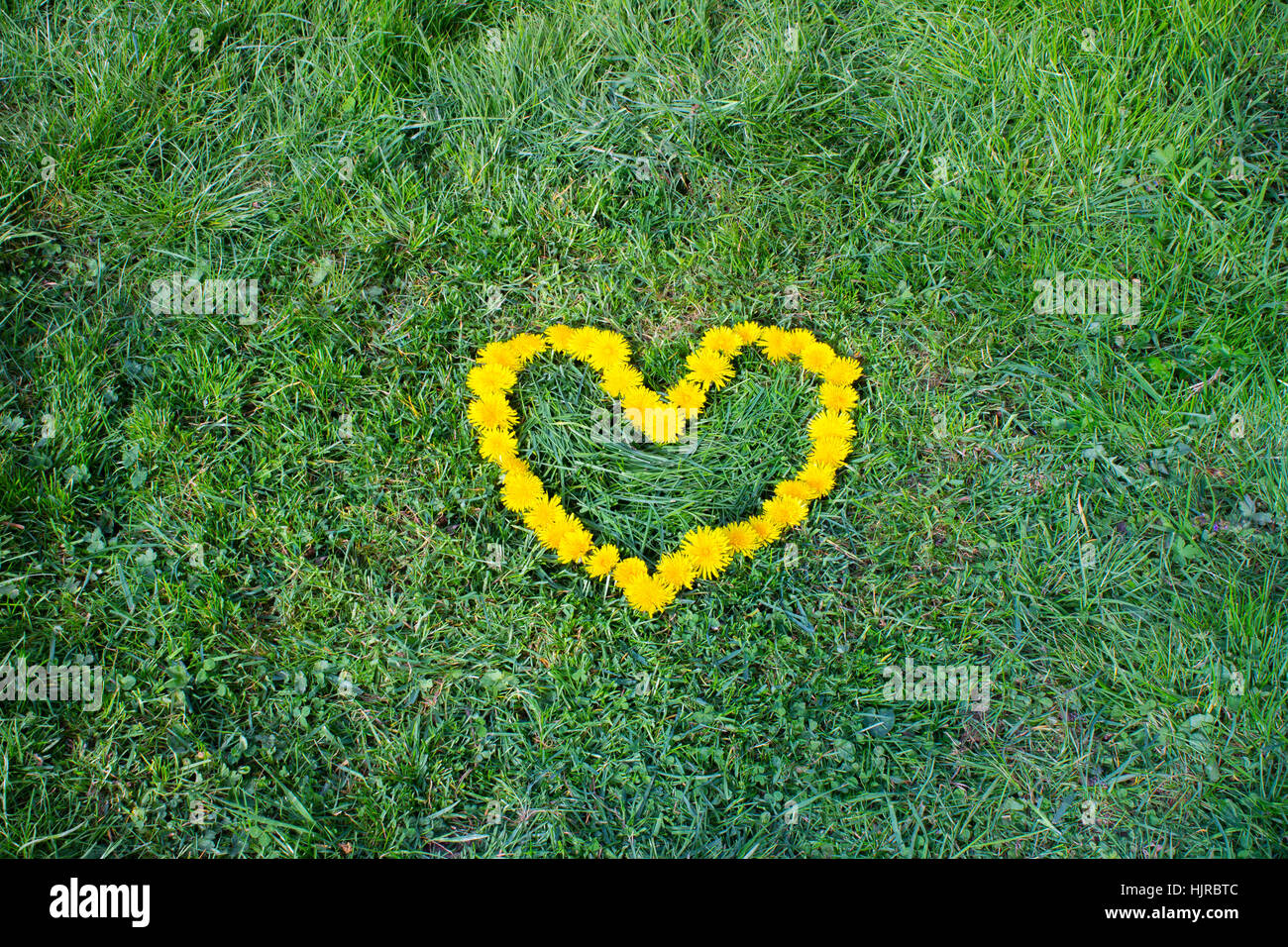 Heart Flower Made Of Dandelion Yellow Flowered Weed Flowers On