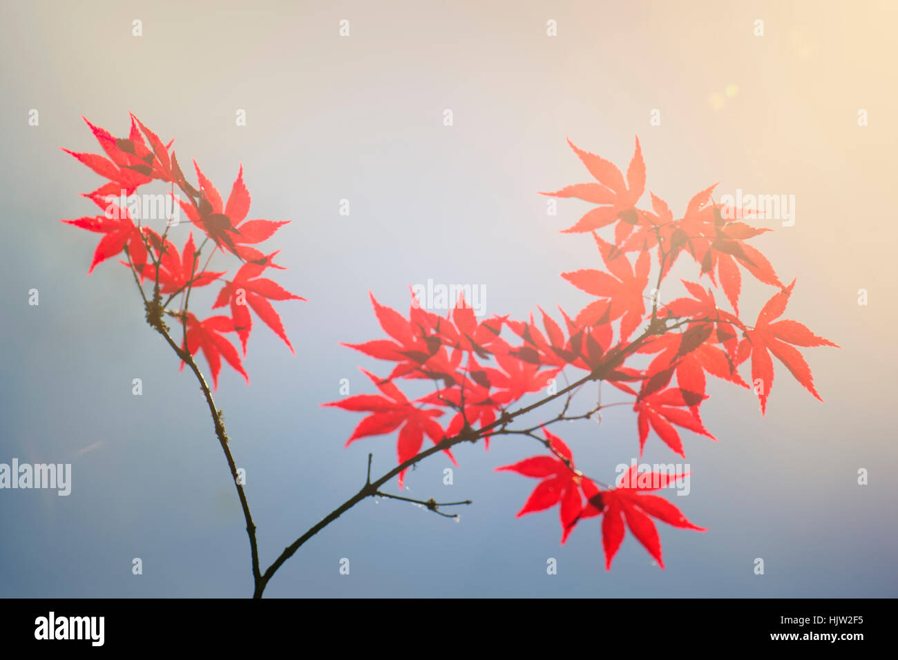 branch with red leafs and blue sky Stock Photo