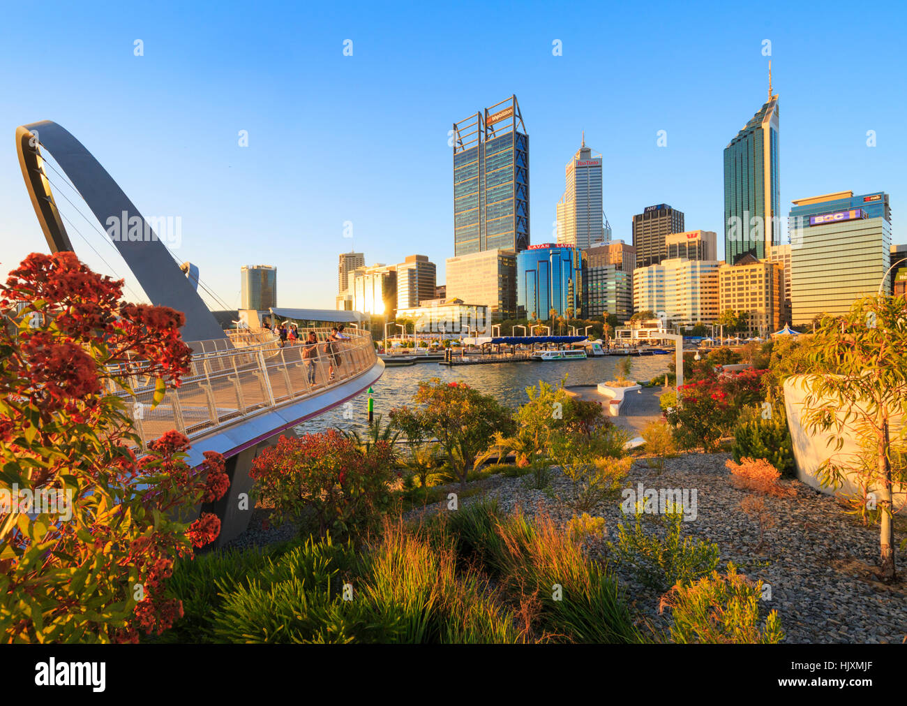 Native plants growing at Elizabeth Quay. - Stock Image