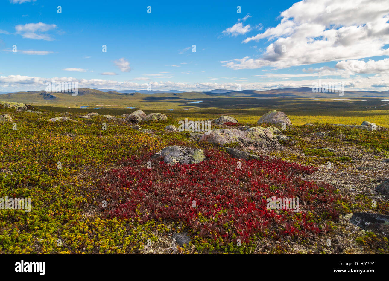 Autumn landscape with alpine bearberry in foreground and mountains in background, Kiruna, Swedish Lapland, Sweden Stock Photo