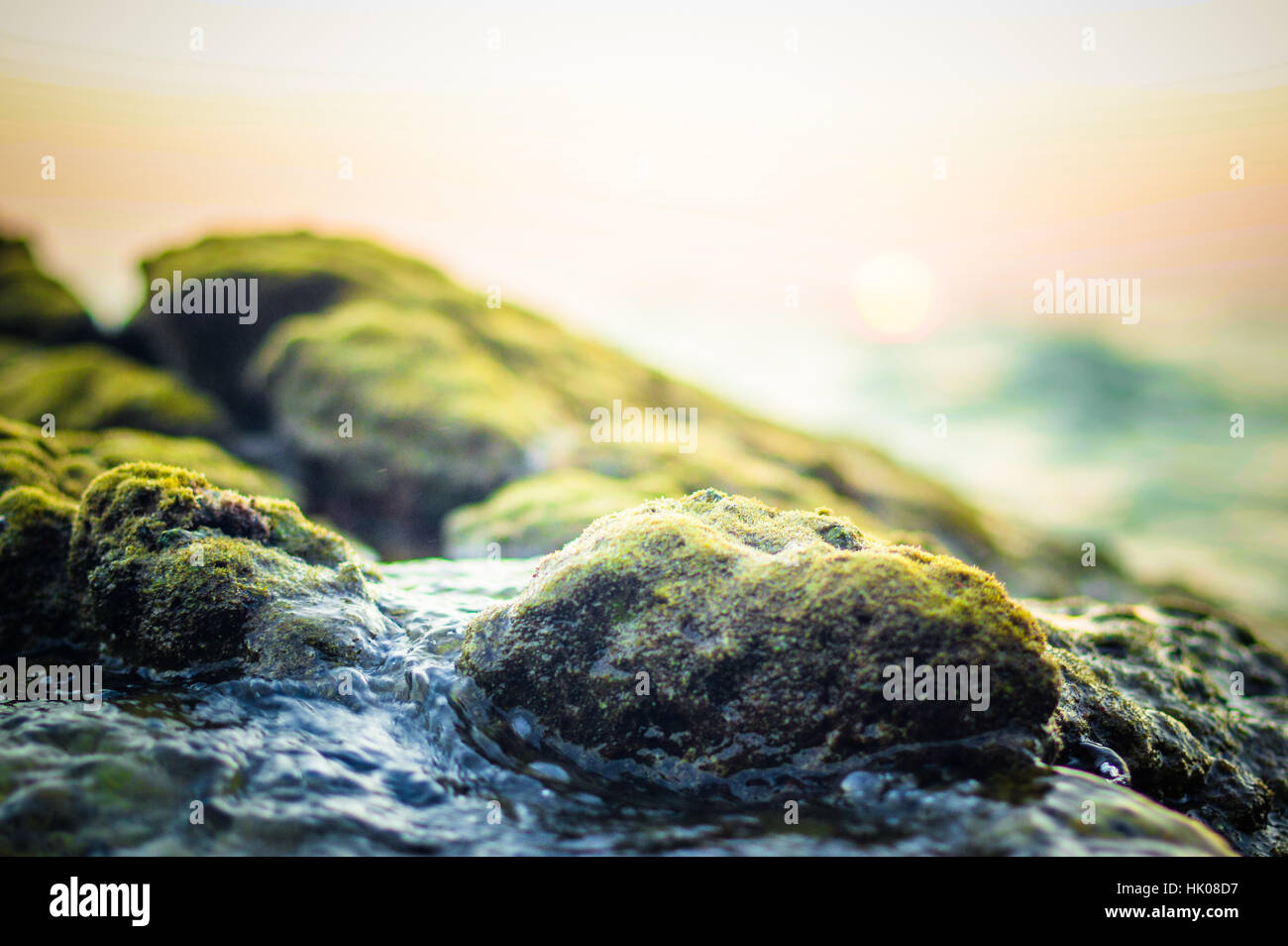 Water plants on the rock close up, nature abstract blurred background. Phuket island, Thailand - Stock Image