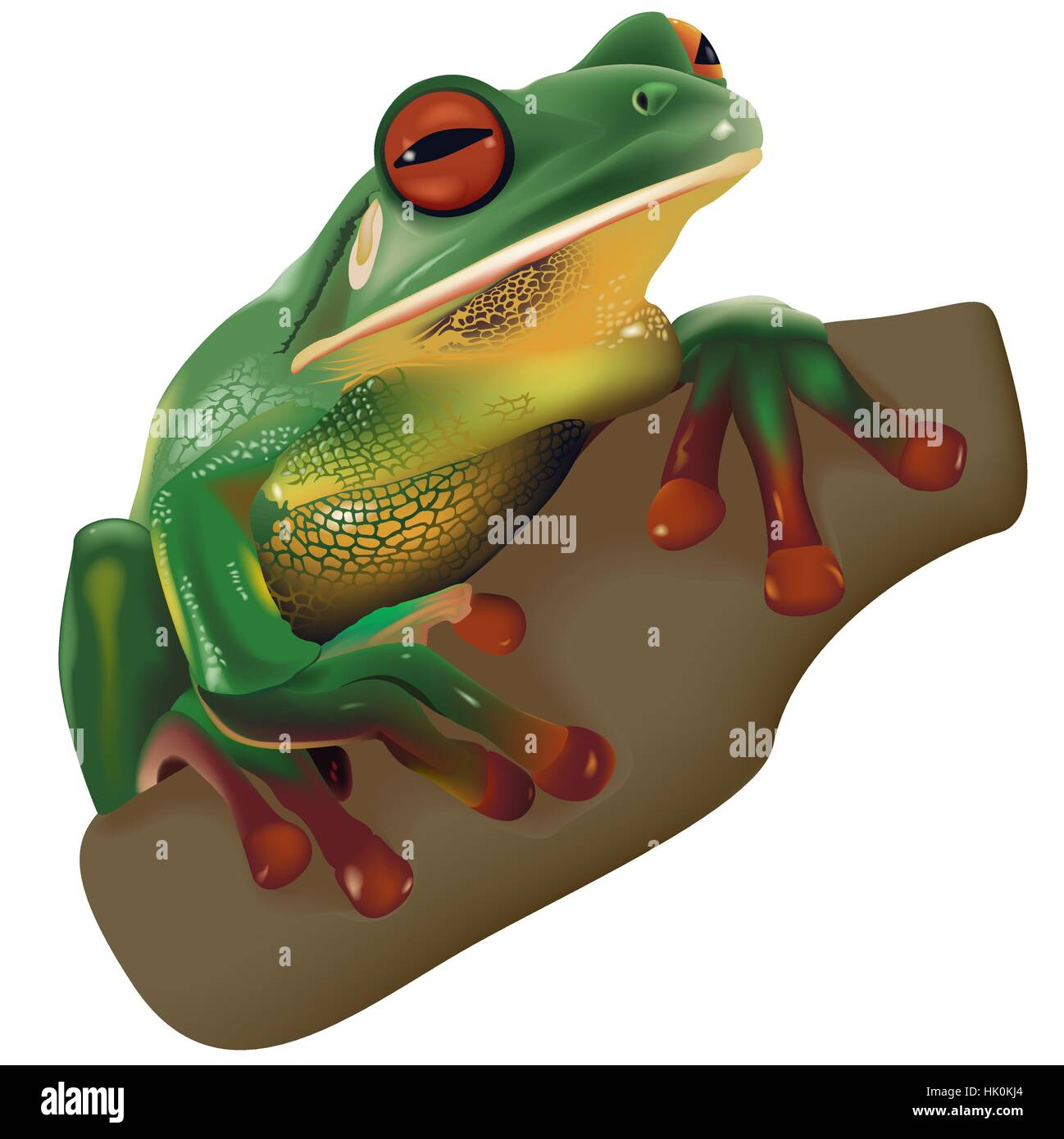 European Frog Stock Vector Images - Alamy