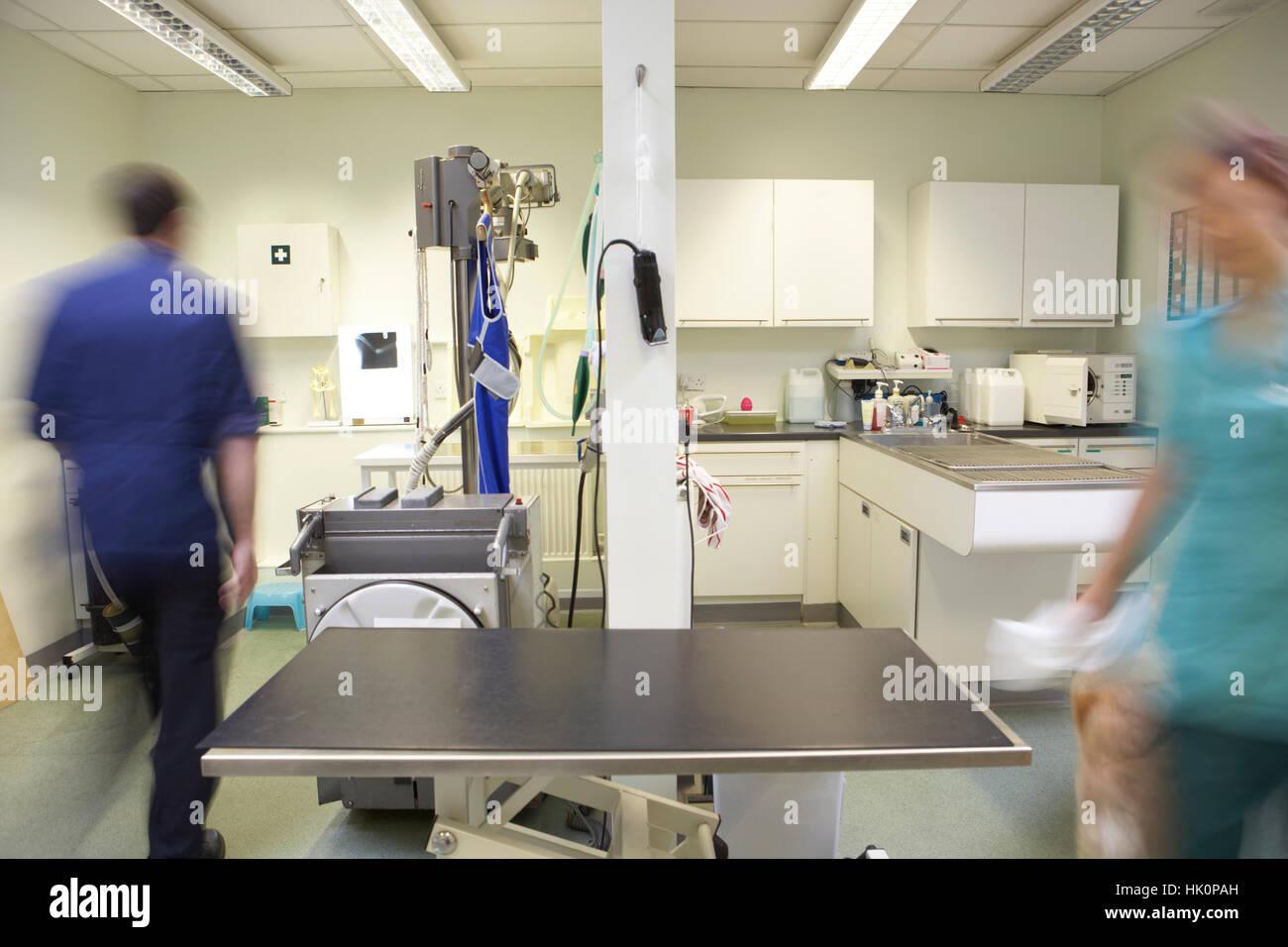 Male Veterinary Surgeon And Nurse Preparing Surgery - Stock Image