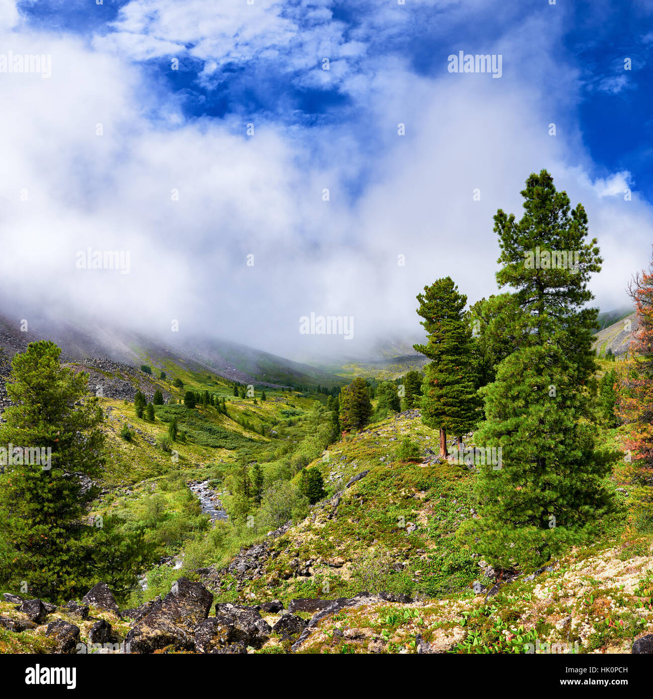 Rising mist over valley of mountain stream. Forest near border of tundra. Eastern Sayan. Siberia. Russia - Stock Image
