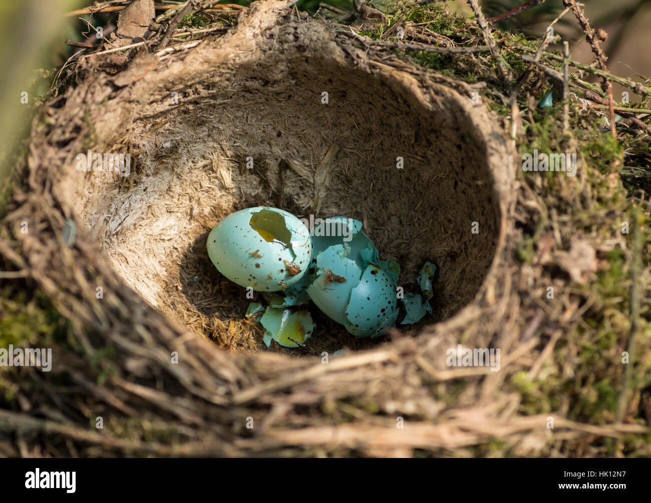 bottom price online vast selection egg, bowl, thrush, clutch, animal, bird, birds, egg ...