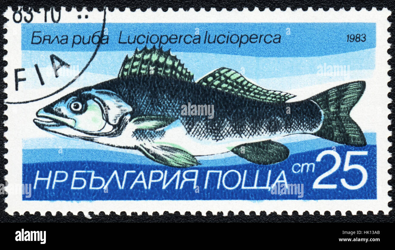 A postage stamp printed in Bulgaria shows  a Fish Lucioperca lucioperca,  series, circa 1983 - Stock Image