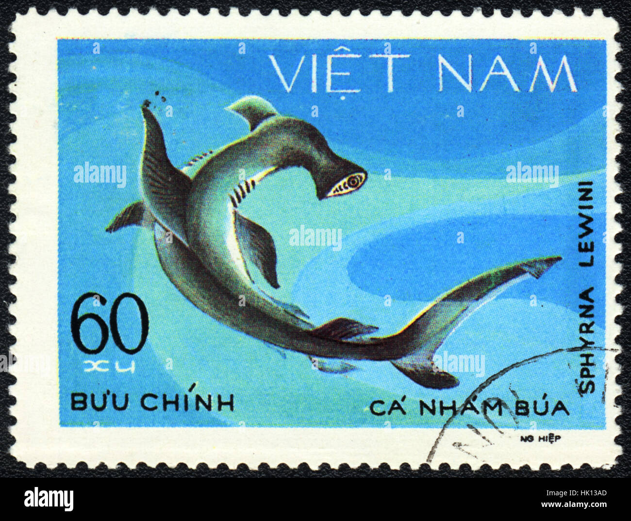 A postage stamp printed in VIETNAM shows a Fish Sphyrna lewini,  series, circa 1980 - Stock Image