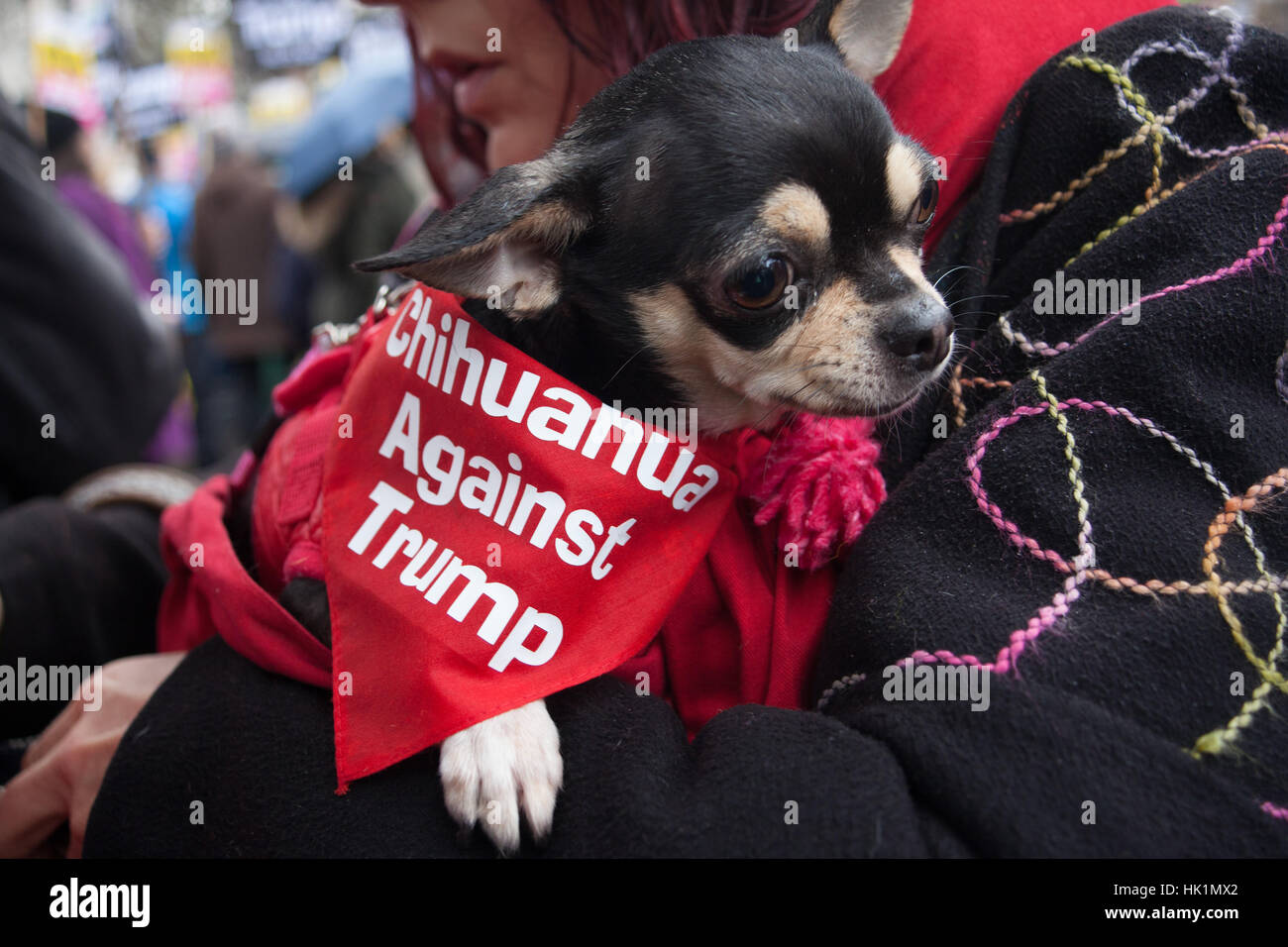 London, UK. 4th February, 2017. A little dog at 4th Feb 2017 London March against Donald Trump Credit: Pauline A - Stock Image