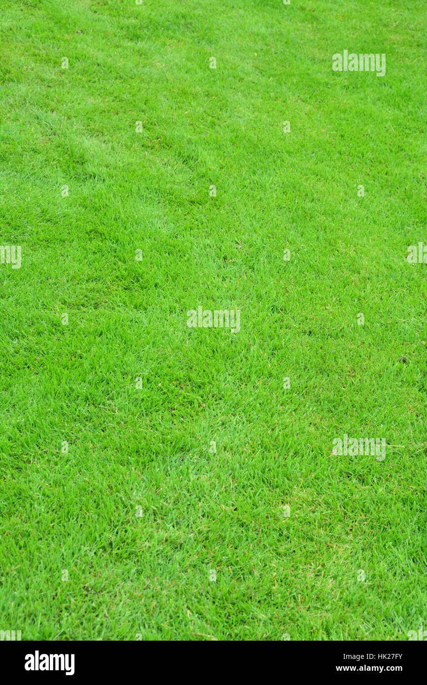 meadow, grass, lawn, green, backdrop, background, green, portrait format, Stock Photo