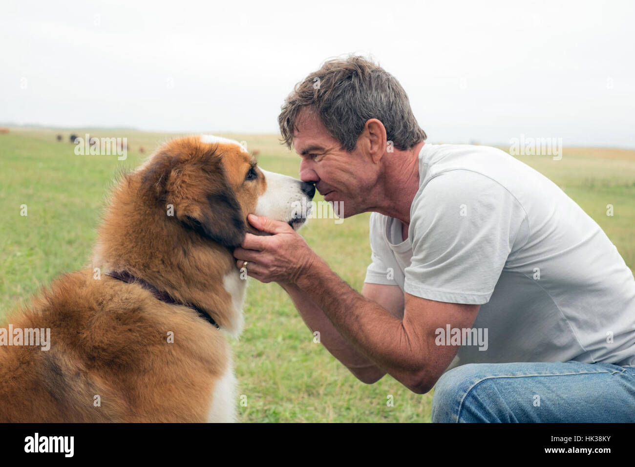 A Dog's Purpose is an upcoming American comedy-drama film directed by Lasse Hallström and written by W. - Stock Image
