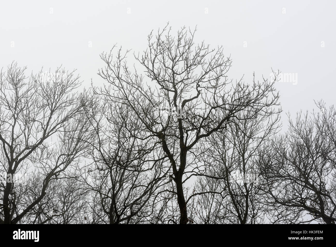 stark - Stock Image