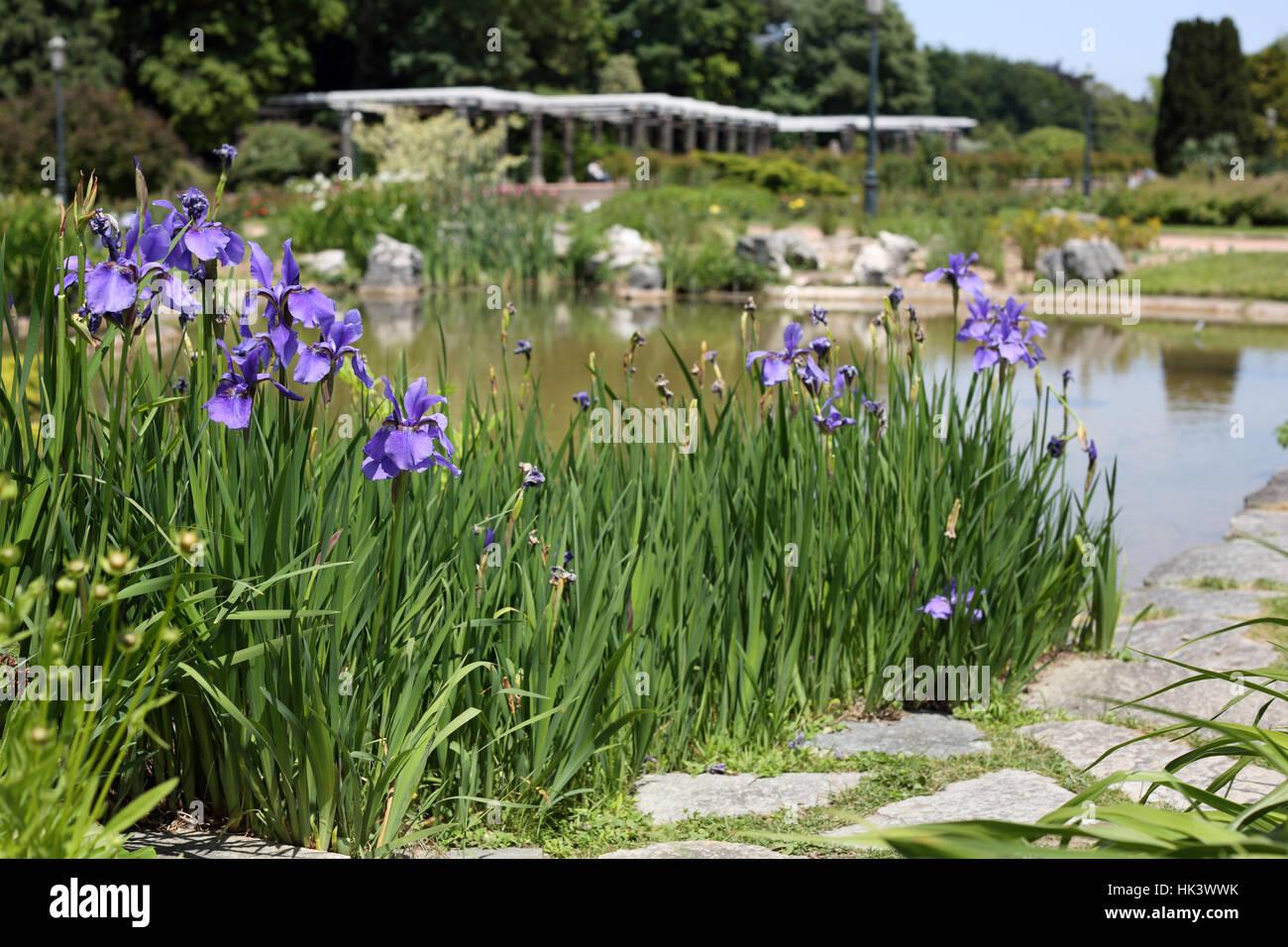 Park flower plant iris flower bed flowerbed garden bloom park flower plant iris flower bed flowerbed garden bloom blossom izmirmasajfo