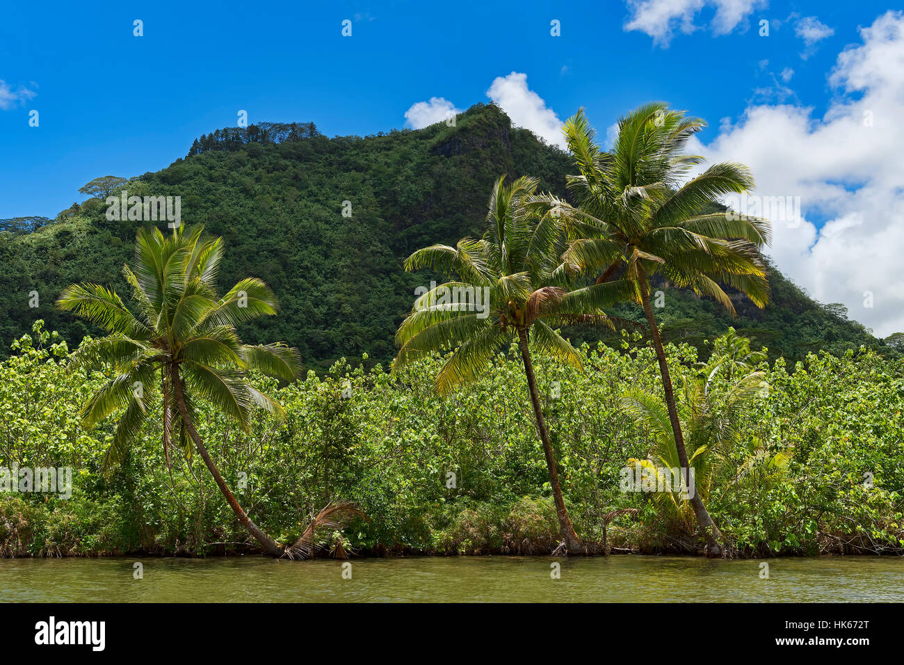 Coconut palms on lush coast, Raiatea, French Polynesia - Stock Image