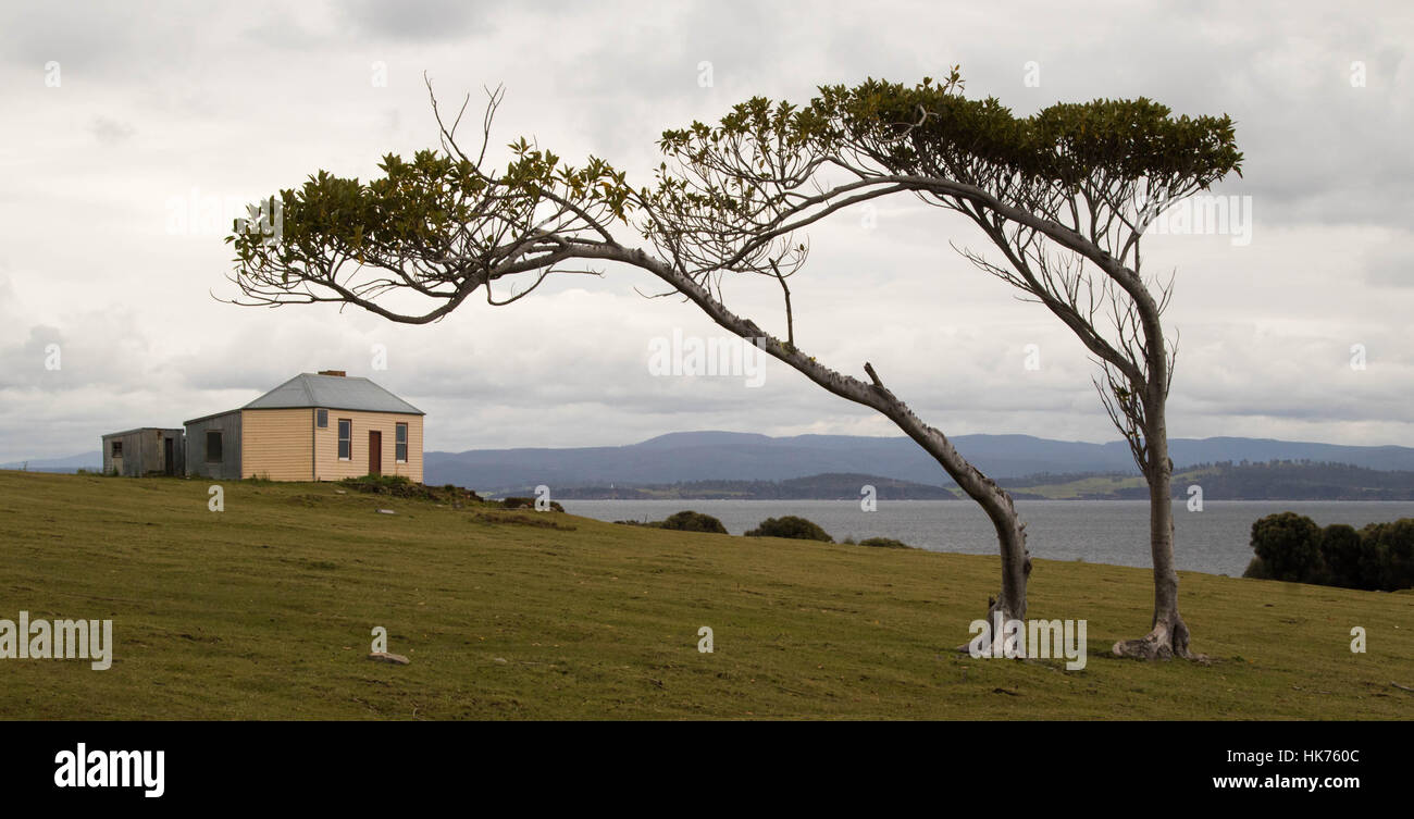old penal colony building behind a couple of windswept trees on Maria Island, Tasmania - Stock Image