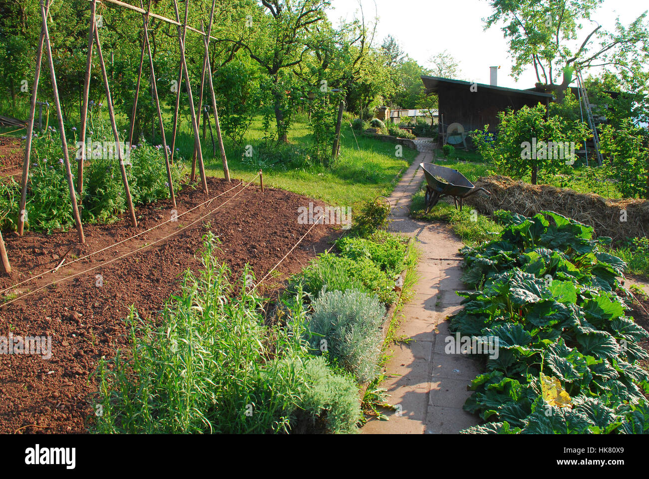 Herb Patch And Bean Bars In The Bio Garden Stock Photo 132327393