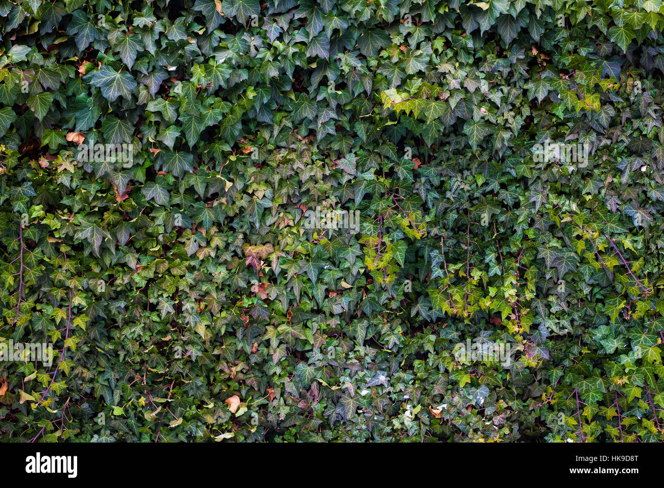 Abstract composition of a wall with lianas. - Stock Image